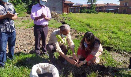 ग्लोबल आइएमई बैंक र त्रिविको सहकार्यमा वृक्षारोपण कार्यक्रम